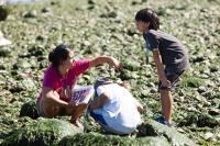 native education on the beach
